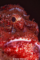 &quot;Fierce Creature&quot;